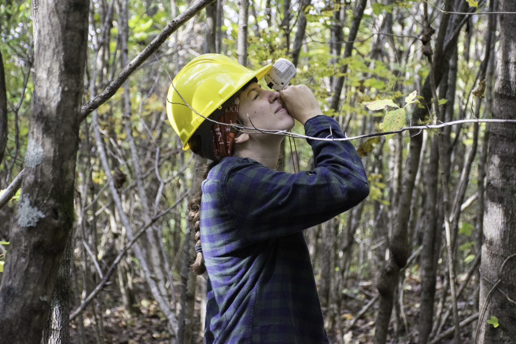A forestry student measures the height of a tree.