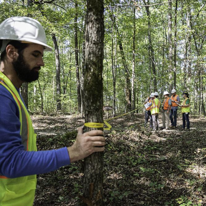 Undergraduate students measure trees at the UT Arboretum