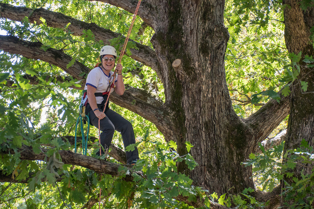 A student practices limb walking in a large tree at the UT Arboretum.