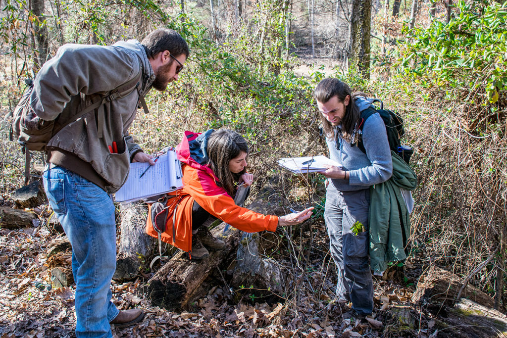 Three students identify species in dendrology class at the UT Arboretum.