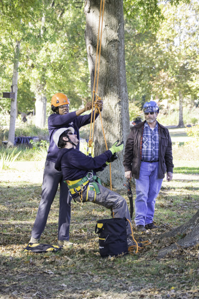 Urban foresters attend to trees within the City of Knoxville.
