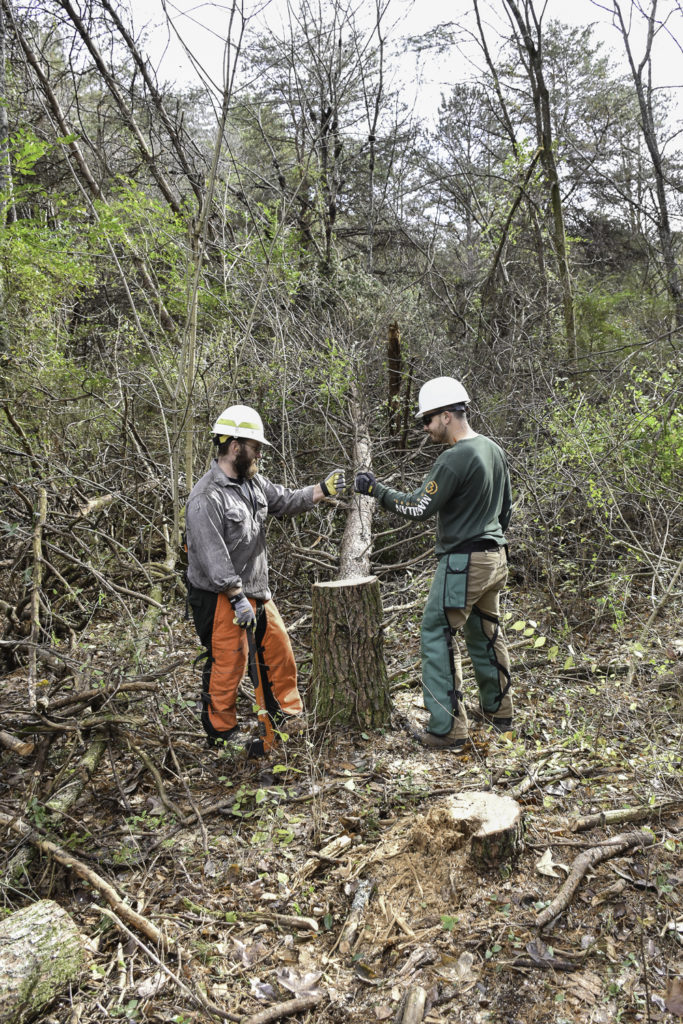 Extension foresters help to manage forest resources.