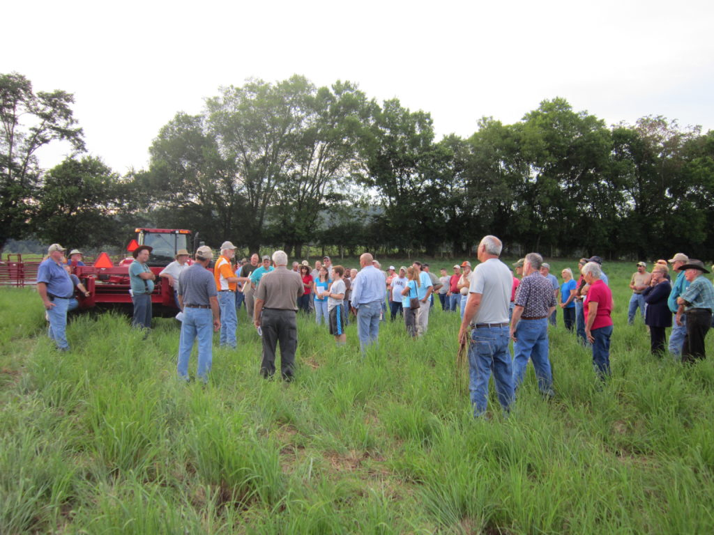 Pat Keyser teaches a seminar on native grasslands in a field at the Holston Research Unit.