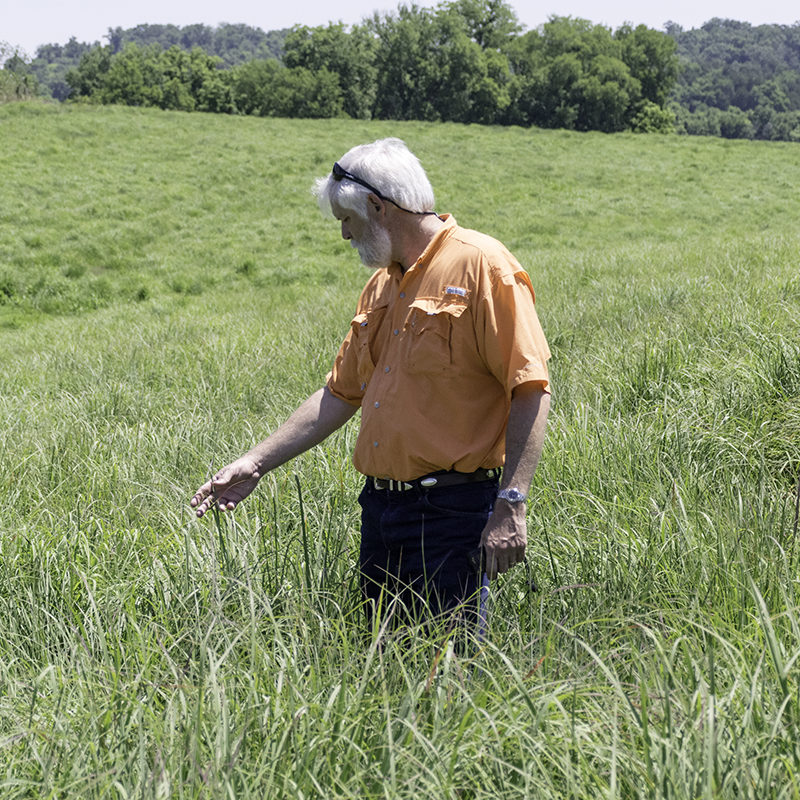 Professor Patrick Keyser inspects a native grass pasture in East Tennessee.