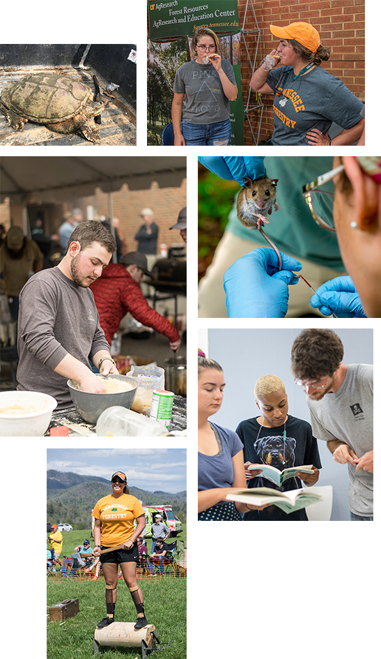 A collage of student groups within the department of Forestry, Wildlife and Fisheries.