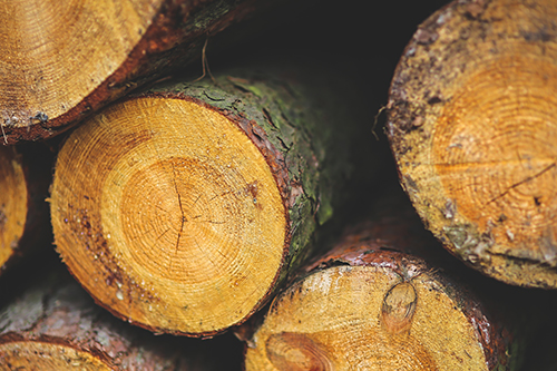 A close-up of freshly cut timber ends.