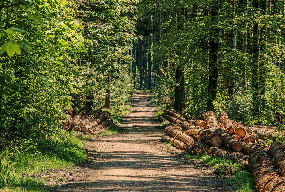 Cut timber piles line a forested path.