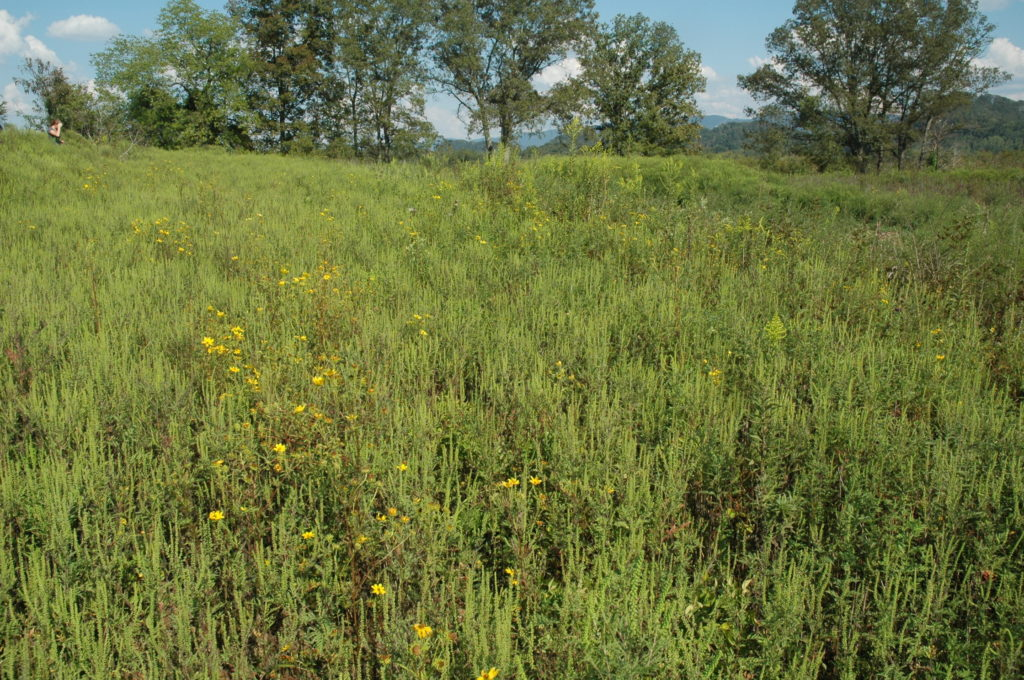 a lush green field with yellow flowers borders a forest.