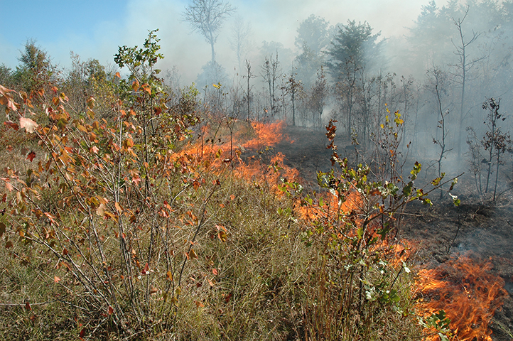 A prescribed fire burns in a forest.