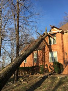 Tree failures can lead to major damages to structures.