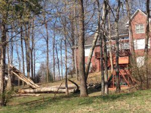 Tree failures can damage both property and life.