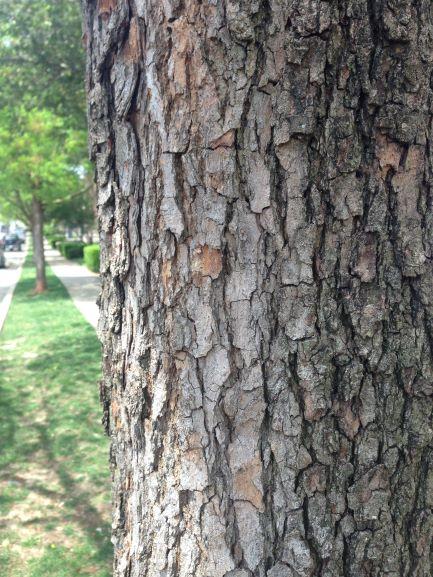 Close-up of rough tree bark.