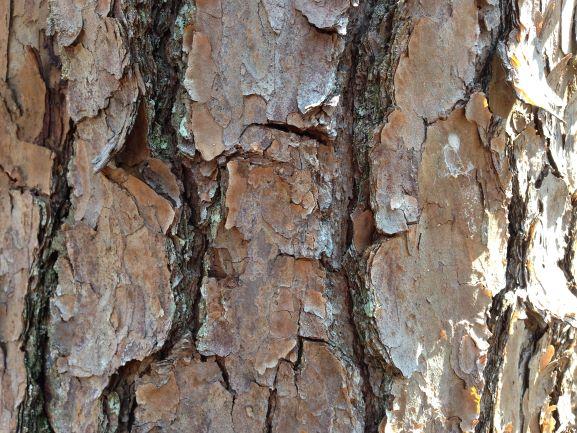 A close-up of rough, chunky tree bark.