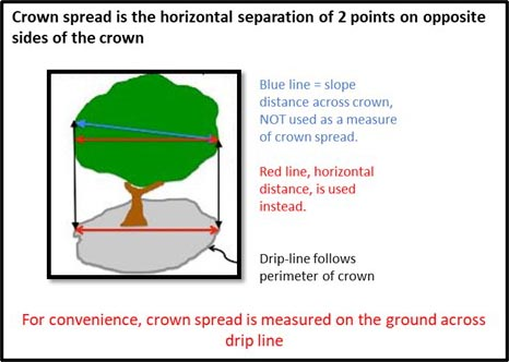 Graphic showing crown spread diagram for a tree.