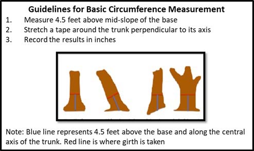 Guidelines for basic tree circumference measurement.