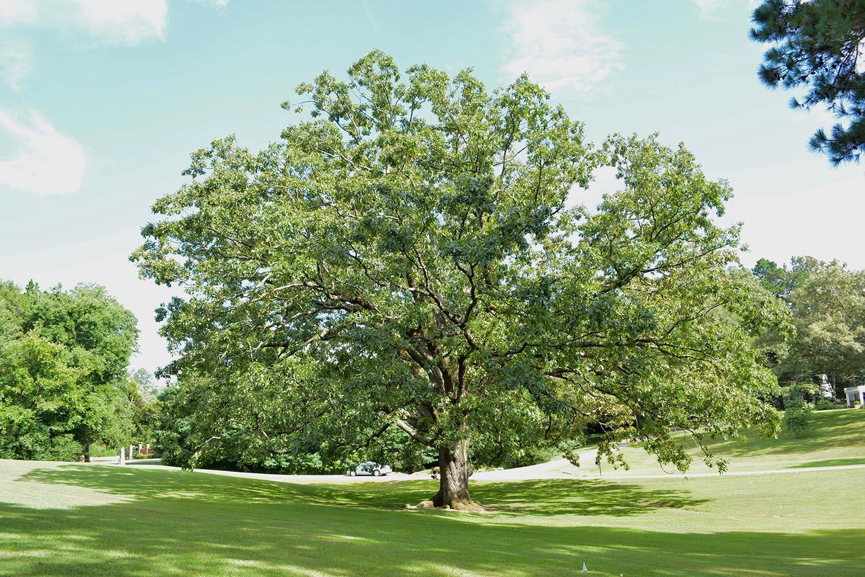 image for Post Oak
