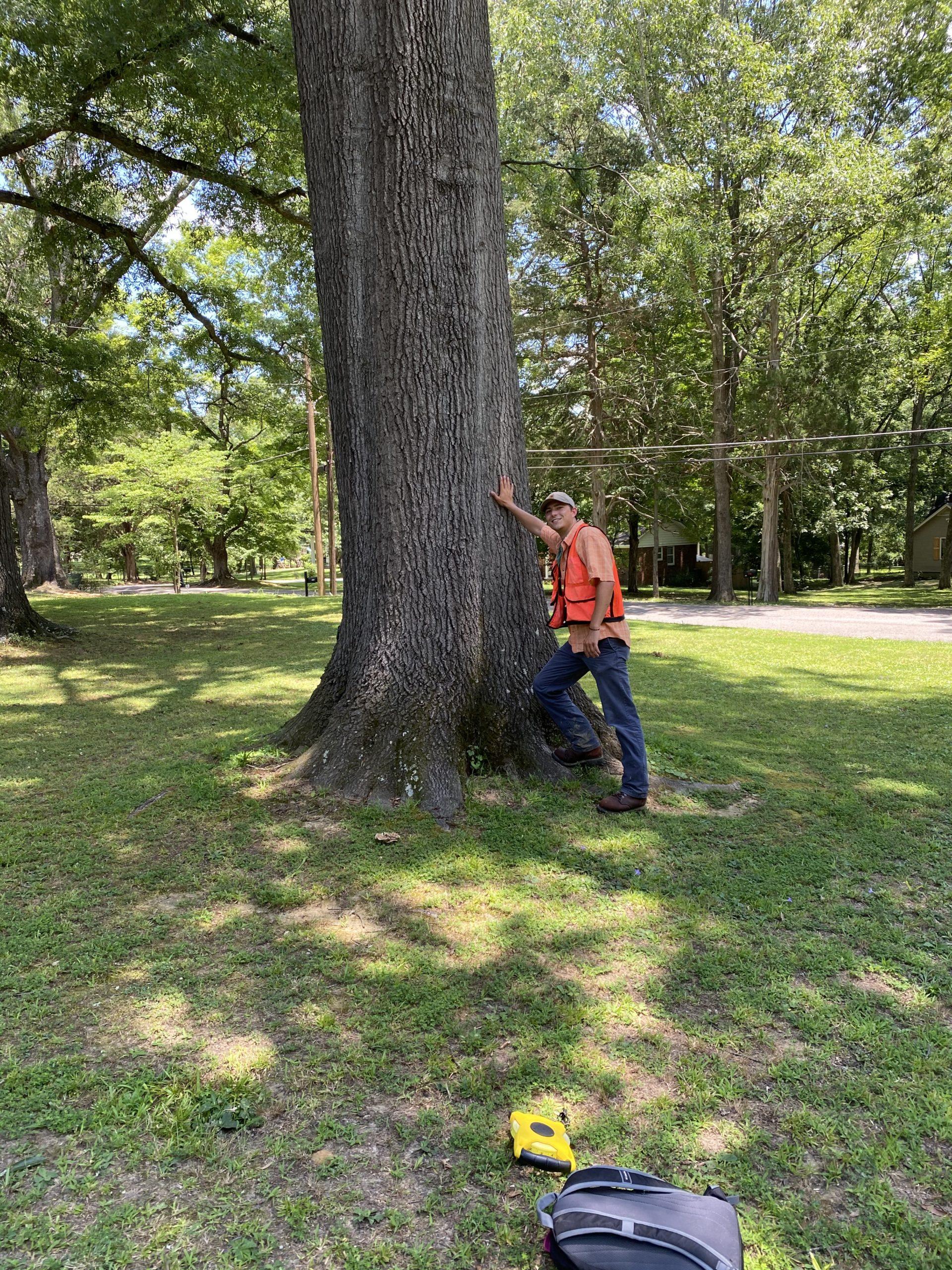 image for Shingle Oak