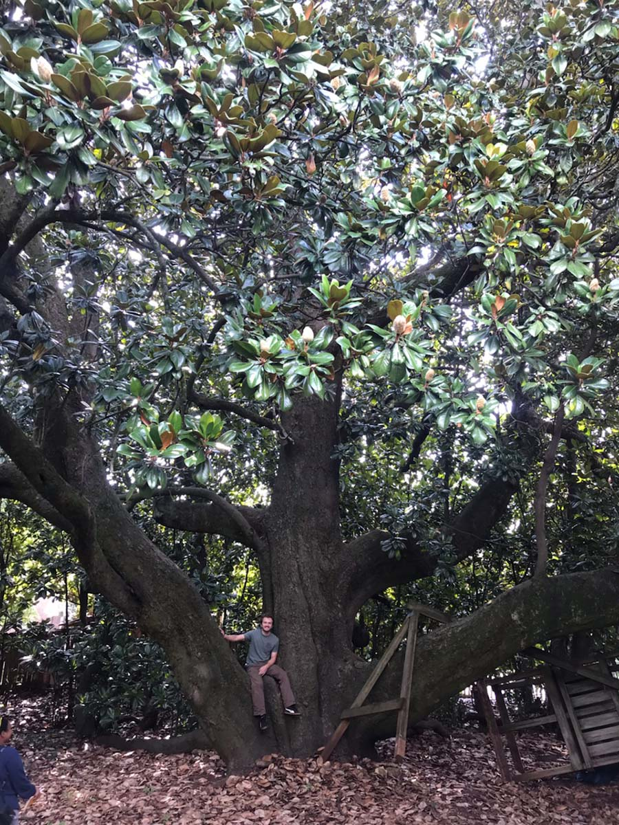 image for Southern Magnolia
