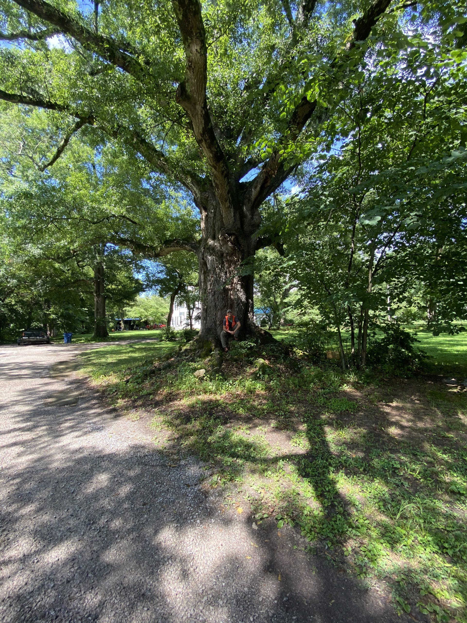 image for Water Oak